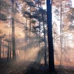 Mežs pie Teteriņu ezera. Foto: Jānis Kamerāds.