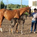 2015. gads. Iveta Pāže ar zirgiem.