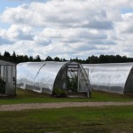 Siltumnīcās tiek audzēti ne tikai gurķi un tomāti, bet arī vīnogas