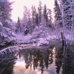 2012. gads. Teteriņa ezers. Foto: Jānis Kamerāds.