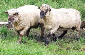 Pelava SIA, bioloģiskā lauksaimniecība