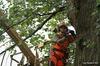 Tree Climbers, SIA