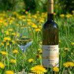 """Vīna darītavas """"Tēviņi"""" pieneņu vīns (Zemītes pagasts)."""