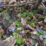 2015.gada pavasaris Imulas krastā. Foto: Anda Štrausa