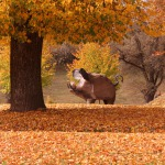 """2014.gada rudens. Skulptūra """"Mežakuilis"""" Kandavā pie Bruņinieku pilskalna. Foto: Linda Romanovska"""